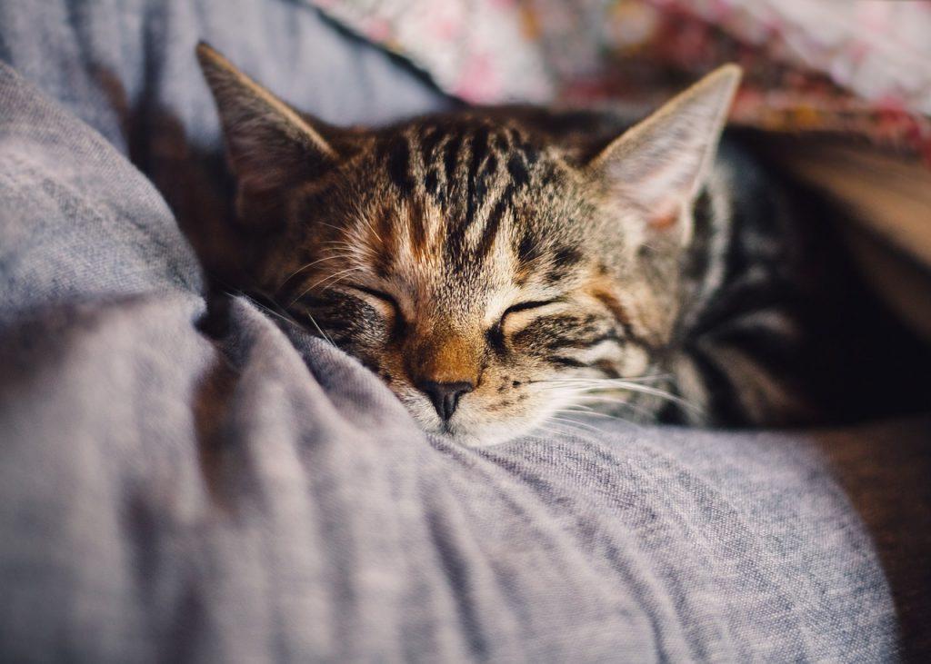 tips bij slaapproblemen